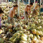 Coconut Factory Mekong Delta