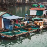Fishing Village on Halong Bay