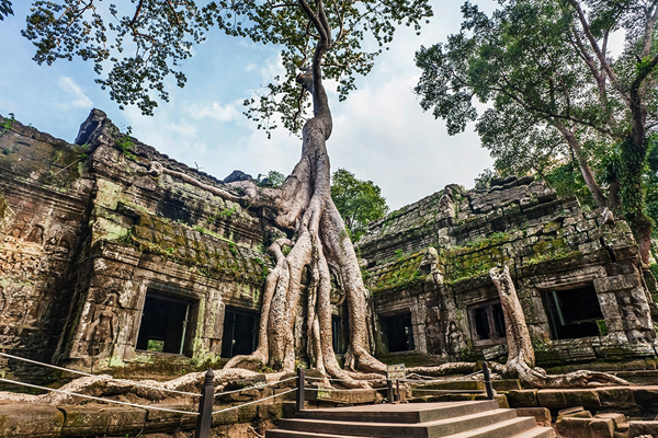 Old Banyan tree root on the ruins of Ta Prohm Temple