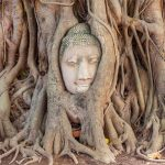 Stone Buddha Head Fig Tree in Wat Mahathat