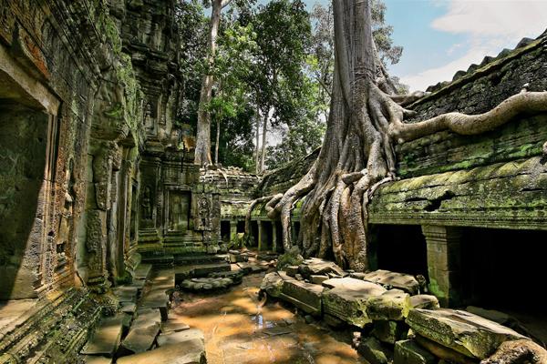 Ta Prohm Temple - Indochina 21 Day Itinerary