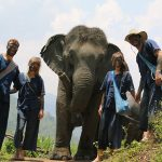 Thai Elephant Home Chiang Mai