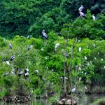 Thung Nham Ecotourism Ninh Binh
