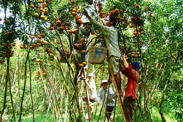 Orchard Fruit Garden Mekong - Indochina Tours 3 Weeks