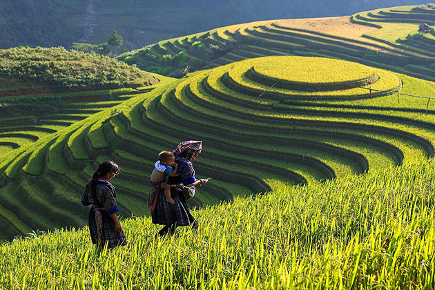 Rice terrace in Ta Van village Indochina 3 Week Itinerary