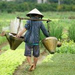 Hoi An Farming and Eco Tour