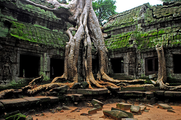 Ta Prohm Temple - 10 Day Cycling Tour in Vietnam Cambodia