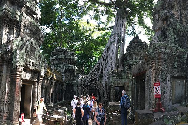 Ta Prohm Temple - Cambodia Laos 11 Day Tour
