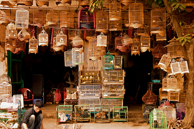 Bird cage making workshop in Hanoi Old Quarter