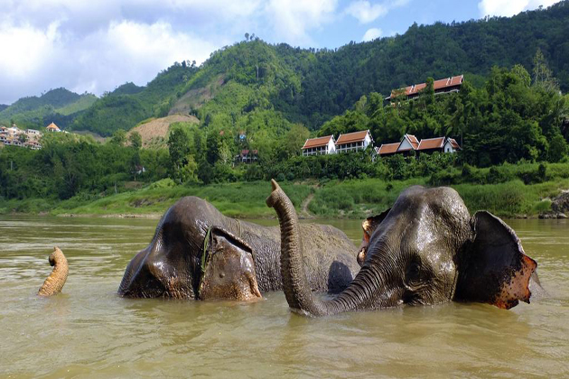 elephants in pak beng indochina tours 29 days