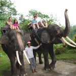 Elephant camp indochina tours