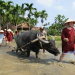Hoi an farming tour vietnam