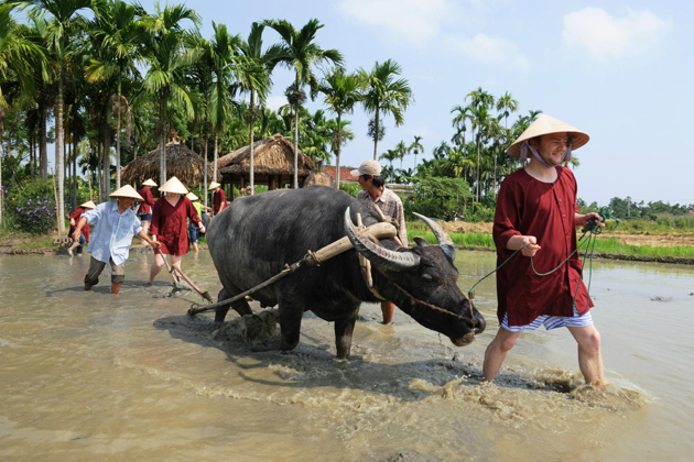 Hoi An Farming Tour Vietnam - 25 Day Southeast Asia Vacation