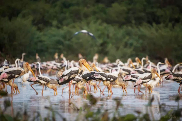 Prek Toal Bird Sanctuary Cambodia - 25 Days in Southeast Asia