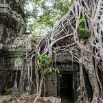 Bayan Tree Root on Ta Prohm Temple
