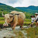 Vision of Vietnam – Cambodia – Laos – Thailand Tour – 16 Days