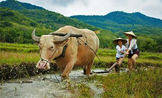 Vision of Vietnam – Cambodia – Laos – Thailand Tour – 16 Days