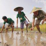 gain authentic experience in living farm land in laos