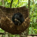 Khuang Si Bear Sanctuary Luang Prabang Indochina Tours to Vietnam and Laos