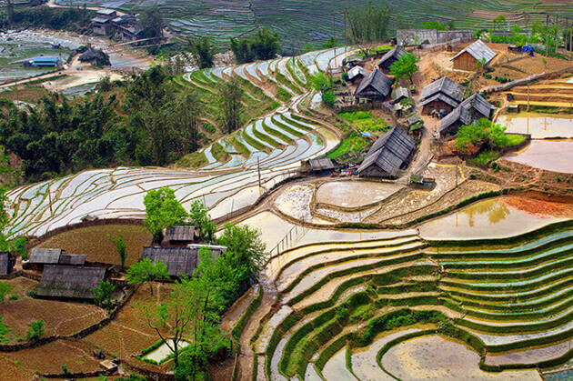 rice terrace in sapa vietnam