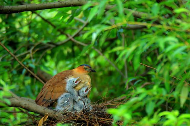 Cuc Phuong National Park - 10 Best Vietnam Ecotourism