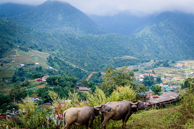 Muong Hoa Valley Sapa - Top 10 Vietnam Ecotourism Experiences