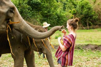 Top 3 Elephant Sanctuaries in Thailand to Visit in 2020
